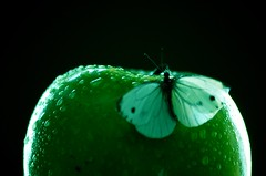 Live as if you were to die tomorrow. Learn as if you were to live forever ... (natus.) Tags: apple green blackbackground butterfly waterdrops drops truelove indoor lightsandshadows lightinginthenight httpwwwimagekindcomartistsdonatus