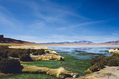 Salar de Tara (dataichi) Tags: altiplano atacama chile desert destination laguna lake landscape mountains nature outdoors tourism travel water