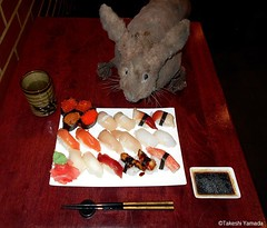 Dr. Takeshi Yamada and Seara (Coney Island Sea Rabbit) at the Sake Japanese sushi buffet restaurant in Brooklyn, NY on March 30, 2016.  20160330 Wed. 5 DSCN4855=3025C. assorted 20 sushi (searabbits23) Tags: searabbit seara takeshiyamada  taxidermy roguetaxidermy mart strange cryptozoology uma ufo esp curiosities oddities globalwarming climategate dragon mermaid unicorn art artist alchemy entertainer performer famous sexy playboy bikini fashion vogue goth gothic vampire steampunk barrackobama billclinton billgates sideshow freakshow star king pop god angel celebrity genius amc immortalized tv immortalizer japanese asian mardigras tophat google yahoo bing aol cnn coneyisland brooklyn newyork leonardodavinci damienhirst jeffkoons takashimurakami vangogh pablopicasso salvadordali waltdisney donaldtrump hillaryclinton polarbearclub