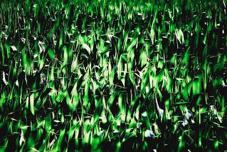 Abstracción verde - In Explore 28-7-16