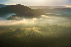 Friedvoller Morgen (Explore) (Philipp Zieger - www.philippzieger-photographie.de) Tags: kiefer schsischeschweiz elbsandsteingebirge landschaft affensteine sonnenaufgang landscape natur hntzschelstiege kuhstall wald forest nebel fog sunrise nature tagesanbruch ruhe stille friedvoll peaceful licht light sony a6000