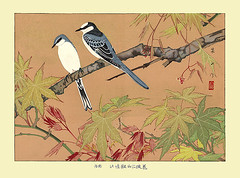 Japanese maple and ashy minivet (Japanese Flower and Bird Art) Tags: flower maple acer palmatum bird ashy minivet pericrocotus divaricatus campephagidae rakusan tsuchiya nihonga woodblock print japan japanese art readercollection