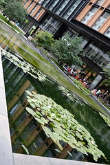 Waters For Lily (dhcomet) Tags: london pancras square pool water waterlily green kingscross stpancras