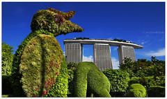Have we met before? - 6849 (willfire) Tags: willfire singapore gbtb mbs gardensbythebay marinabaysands topiary hornbill rhinoceroshornbill greathornbill canonefs1022mm