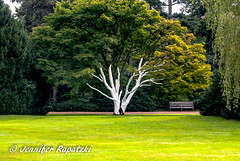 white painted tree (Bernsteindrache7) Tags: landscape outdoor park color summer spring tree sony alpha 100 flora fauna green white