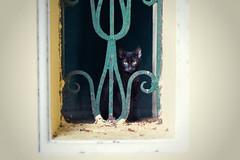 Shy cat (55Laney69) Tags: cat cats animals cute shy rhodos rhodes greek holiday trip traveling travel nikon d600 nikon50mmf18afsg soft analog film quiet peaceful dreamy