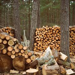 Log - Porta 160VC exp* (magnus.joensson) Tags: sweden swedish land hasselblad 500cm zeiss 100mm planar cf kodak porta 160vc exp c41