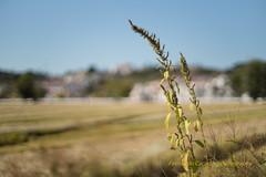 Harvested in Autumn (Capturedbyhunter) Tags: fernando caador marques fajarda coruche ribatejo sorraia santarm portugal pentax k1 revuenon mc 112 12 f12 55mm 55 outono autumn paisagem landscape bokeh outdoor