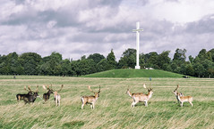 Cross Deer: Phoenix Park, Dublin, Ireland (ciarndoyne) Tags: dublin ireland sunday september morning deer football soccer grass nikon nikond3100 d3100 vsco vscocam cam phoenixpark park