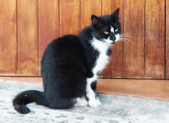 Ibiza - street cat (michaelbeyer_hh) Tags: cat ibiza