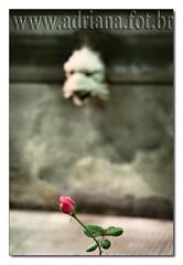 af0608_9614 Casa das Rosas - Sao Paulo (Adriana Fchter) Tags: macro green nature avenida casa natureza flor poesia das paulo sao rosas alvaro so campos literatura ramos paulista azevedo casarosas adrianafchter