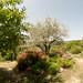 """Les terres sacrées du jardin de l'Abbaye de Valsaintes • <a style=""""font-size:0.8em;"""" href=""""http://www.flickr.com/photos/90528120@N02/8390265860/"""" target=""""_blank"""">View on Flickr</a>"""