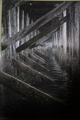 Under the Boardwalk (leilanis visions) Tags: ocean camera wood old travel family light sea sky people woman white mountain abstract man black green art history tourism nature water colors rock canon mom landscape boats photography pier dad waves photographer child starfish abstractart contemporaryart modernart father fineart tripod mother places romance structure photograph barnacles seashell boardwalk destination whiterock wharfs