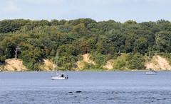 3600 Mit Bumen bewachsene Insel Vilm vor Lauterbach / Rgen - die Insel gehrt zum Biosphrenreservat Sdost Rgen. (stadt + land) T