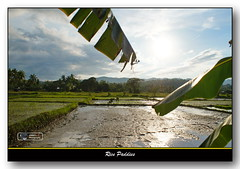 Paddies (VRMJ) Tags: travel nature beauty landscape farm sony philippines cebu alpha550 vrmj