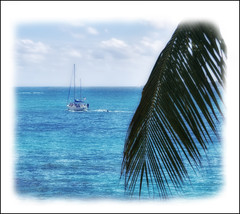Sailboat Speeding Pass A Palm Frond (Simon__X) Tags: ocean travel cruise blue light sea vacation sky mountain holiday hot tree love tourism beach nature water colors beauty sunshine clouds marina swimming palms landscape island bay coast harbor boat seaside cool i