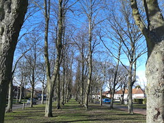 Greenwood Avenue, Acocks Green - trees