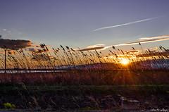 Atardecer en el Delta del Ebro (Sunset in the Ebro Delta) (aldairuber) Tags: sunset atardecer puestadesol deltadelebro rememberthatmomentlevel1 rememberthatmomentlevel2