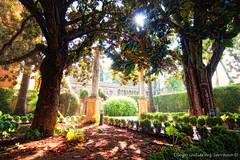 Jardines del Alczar (Di Gutti (diegogutierrez79@gmail.com)) Tags: sun sunlight tree sunshine arbol sevilla arboles seville andalucia alcazar andalusia hdr sunray gettyimages diegogutierrez arvre jardinesdelalcazar sevillan canon450d sevillban