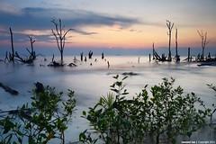 ::G.R.O.W.T.H:: (Zawawi Isa) Tags: life sunset seascape beach nature landscape nikon exposure mangrove pantai selangor bakau d600 kelanang nikonflickraward