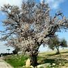 Blossom tree.