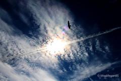 (58/234) High Soaring (MissMegan95) Tags: blue summer sky bird nature sunshine silhouette clouds contrast dark skyscape flying washington colorful state soaring edit upward