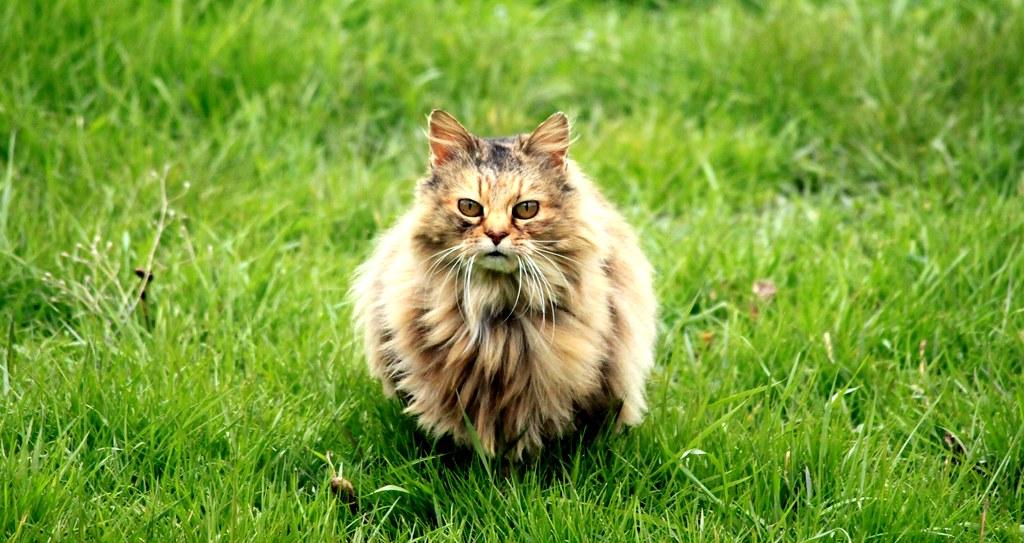 noir ébène mature chatte