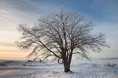 The buoy and the tree (- David Olsson -) Tags: morning winter mist lake snow cold tree nature fog landscape early big nikon sweden tracks footprints safety karlstad footsteps february fx lifebuoy vnern lonelytree lifering d800 trygghansa vrmland 1635 1635mm skutberget 2013 buoyant lonesometree davidolsson 1635vr yearend13