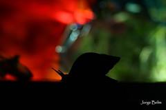 Caracol (1039) (Jorge Belim) Tags: noturna preferida canoneos50d