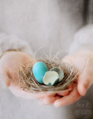 waiting for spring... (..Ania.) Tags: stilllife spring hands nest egg birdnest textured robinegg texturesbykimklassenthankyou