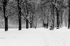 Winter - Berlin (GZZT) Tags: park schnee winter people snow berlin sw guessedberlin gwbatineb martinbriese