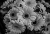 Pike place flowers (F-Stop Seattle) Tags: seattle flowers white black nikon place market pike d800 2470