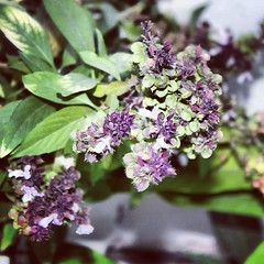 #       #  #wrd#flower#green#instauae #instawebs #Instagram (~ it's OvEr) Tags: square squareformat hudson iphoneography instagramapp uploaded:by=instagram