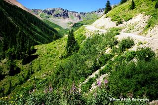 Ophir Pass Road