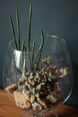 Succulents in Large Brandy Glass (Ken Marten) Tags: cacti succulent terrariums kenmarten hermeticalondon