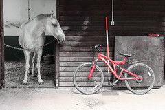 Your choice (raven fandango) Tags: pony horse bike bicycle red ride farm stable filter filtered mono black white kit lens animals british canon 70d eos july 2016 summer countryside england english hertfordshire herts photography photo stevenage uk