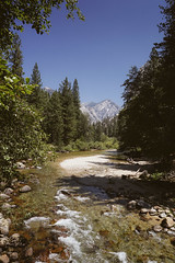 CA-CO (43 of 60) (codywellons) Tags: sequoia national park california nature kings canyon mountain a7ii