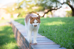 4642016/8/26 (Natsuki_y) Tags: cats cat straycat snap tokyo canon 5d 24105mm