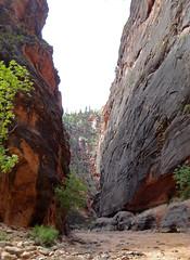 Zion Narrows (jeffho830) Tags: zionnationalpark narrows flooded canyon