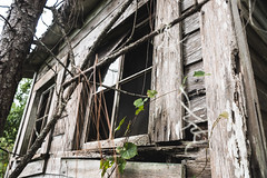 _DSC8966 (CassinStacy) Tags: abandoned florida bando house home left behind forest woods spooky spook scary horror