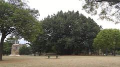 20160811_120339 (filipealves1) Tags: sopaulo trees nature natureza parque ibirapuera brazil brasil
