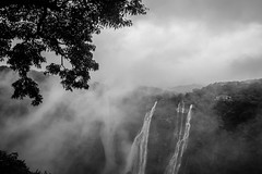 Mighty Nature | Jog Falls,India. (vjisin) Tags: waterfalls falls jog karnataka india asia inexplore composition tree water mist fog cwc chennaiweekendclickers blackandwhite monochrome monsoon westernghats ghats nikond3200 nikonofficial nikon nikonindia cwc534 twop outdoor sky serene cloud clouds