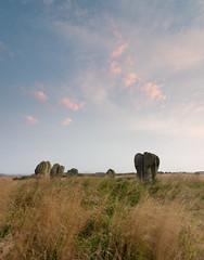 Duddo - Northumberland. (Callaghan69) Tags: duddo stonecircle standingstones fivestones northumberland landscape landmark historic neolithic monolith monoliths nikon d810 uk
