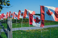 CanCon (My1K) Tags: canada canadian flag