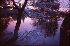 (bensn) Tags: pentax lx fa 31mm f18 limited film slide provia 400x japan nagano multiexposure water lake cherry blossoms tree trees flowers evening reflection