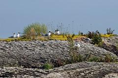 20150703-160F (m-klueber.de) Tags: 20150703160f 20150703 2015 mkbildkatalog norwegen norge norway oslo fornebu strand