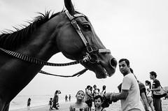 Marina Beach, Chennai, 2016 (bmahesh) Tags: marinabeach chennai tamilnadu india people horse beach life kids ricohgr wwwmaheshbcom
