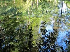 Les Fontaines bleues, reflets - Parc du château de Beaulon, Saint-Dizant-du-Gua (17) (Yvette G.) Tags: charentemaritime 17 poitoucharentes château châteaudebeaulon saintdizantdugua fontainesbleues jardin jardinremarquable fontaine source reflets