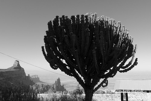 Euphorbia landscape