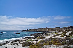 Isla Damas (duiliof) Tags: isla damas punta de choro chile naturaleza nature environment ambiente fauna sony alpha a58 tour sea island